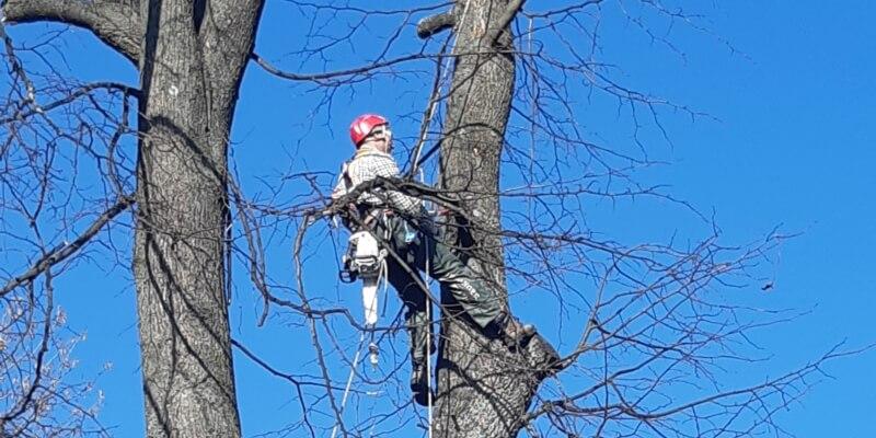 rizikové pílenie stromov