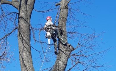 služba rizikové pílenie stromov